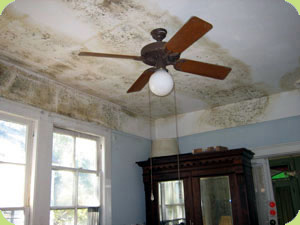 Focus On: Mold Illness