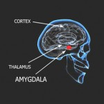 Amygdala Retraining™ Program