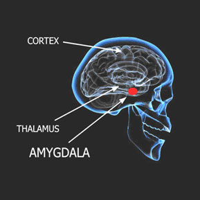 Gupta Amygdala Retraining™ Program