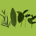 Smilax and other herbs