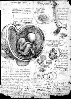 Vinci Womb