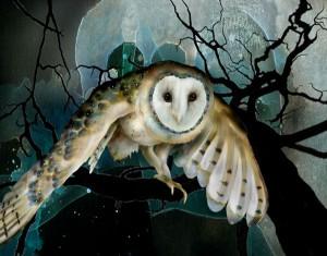 Barn Owl ©Jeannine Chappell