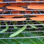 Making vegetable chips in a food dehydrator