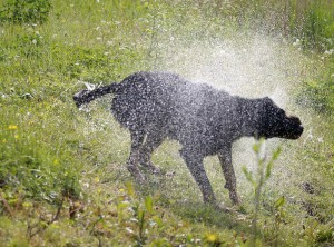 Wet Dog by Marjolein at flickr