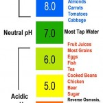 The alkaline brain: Dietary concerns in lyme-borreliosis